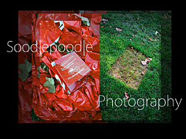 Soodlepoodle Startbild 2011- Oktober