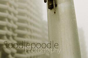 Soodlepoodle Startbild 2011- November
