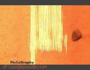 pinxography-leerscan