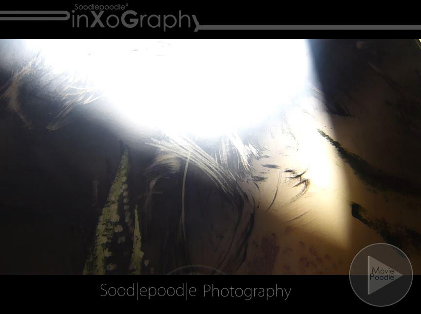 moviepoodle_1040717scsh01p